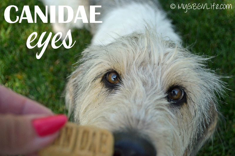 My GBGV Life canidae eyes where one equals two