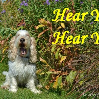 Celebrate National Walk Your Dog Week With Us #DogWalkingWeek