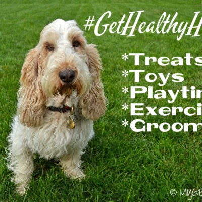 5 Important Little Extras For Your Dog #GetHealthyHappy