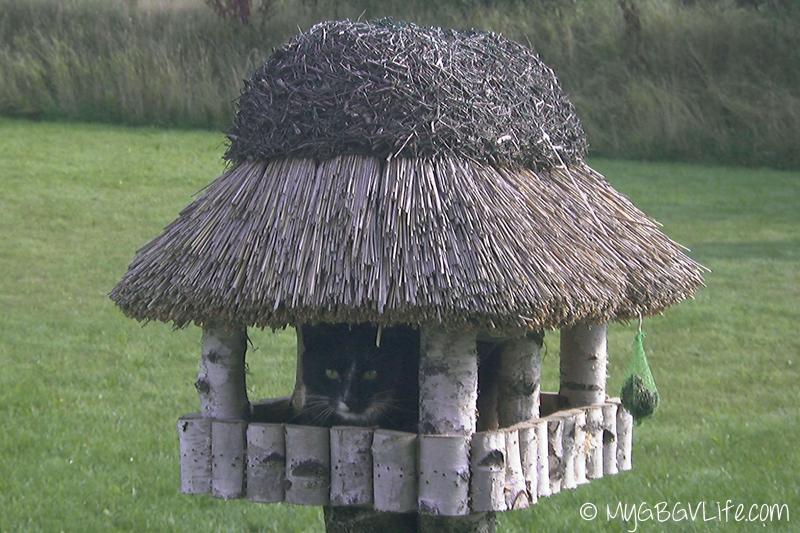 My GBGV LIfe Bert in birdhouse