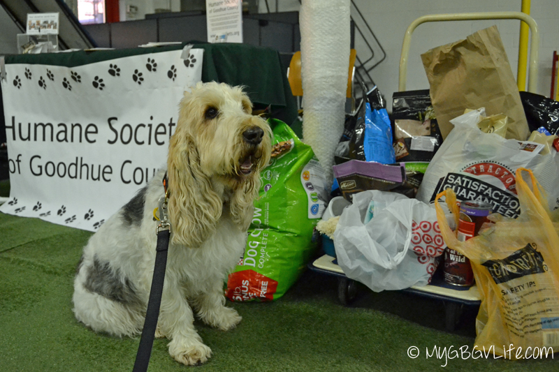 My GBGV Life DOGFACE party shelter donations
