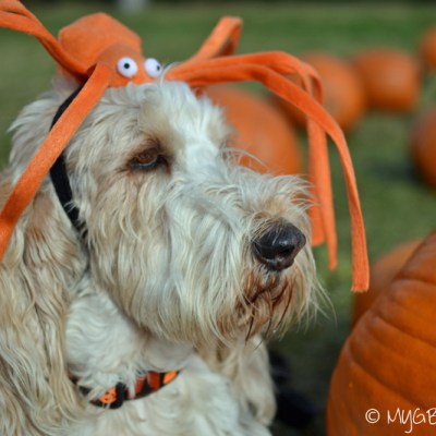 Our Quest For A Pumpkin Patch
