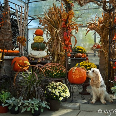 Halloween At The Garden Center