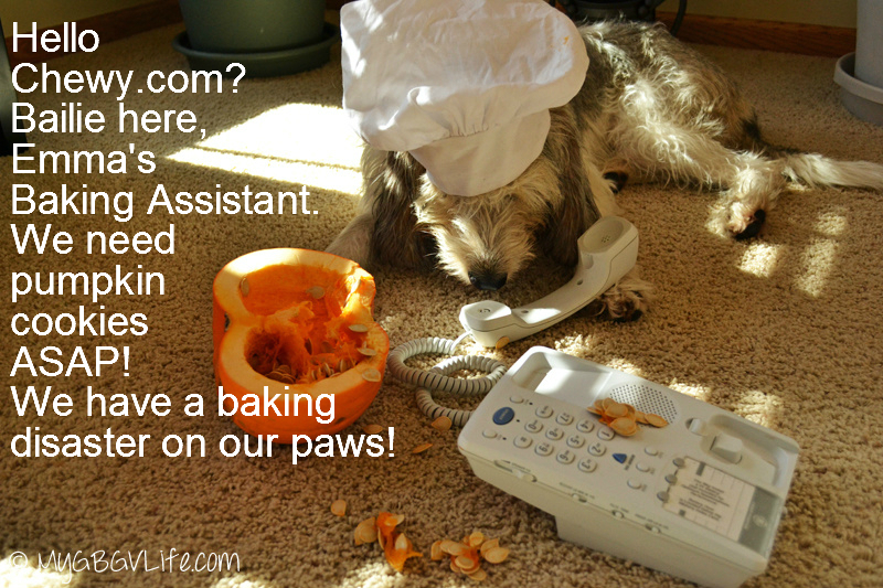 My GBGV Life Bailie calls chewy.com about kitchen disaster