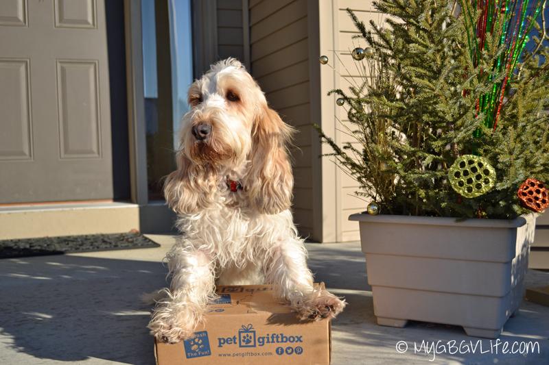 My GBGV Life Pet Gift Box arrives