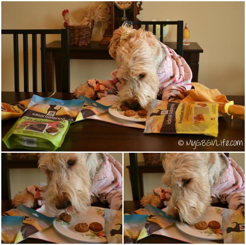 My GBGV Life tasting waffle and egg treats