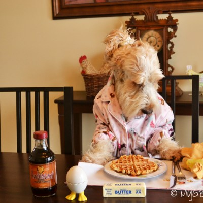 Waffles For Dogs The Easy Way