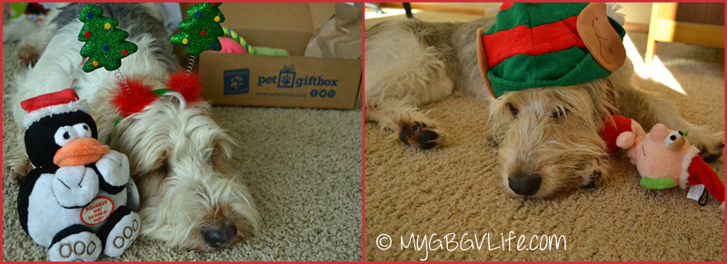 My GBGV Life sleeping with pet gift box toys