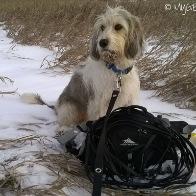 Preparing For A Tracking Dog (TD) Test