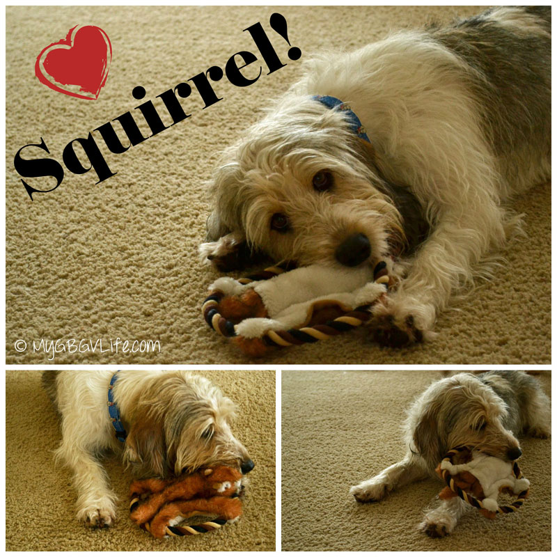 My GBGV Life Bailie with squirrel toy