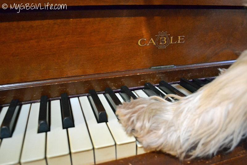 My GBGV Life paws on the music keys