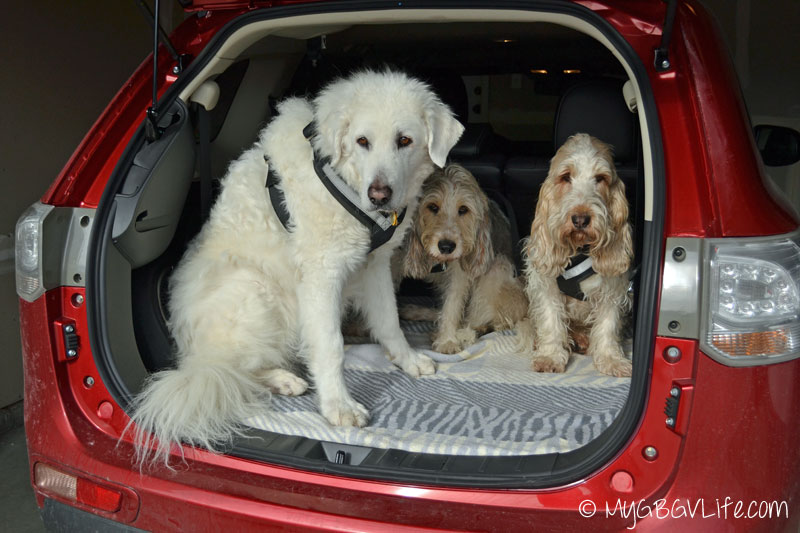 My GBGV Life Outlander CUV space for pets