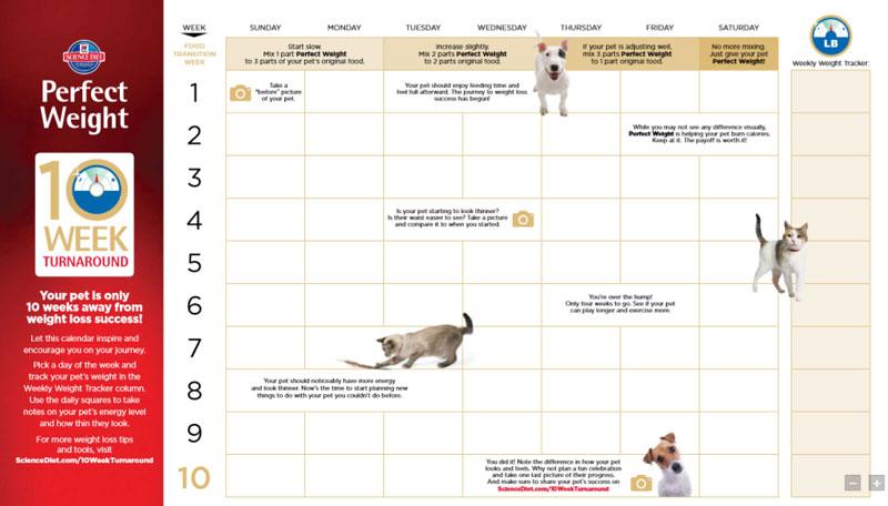 My GBGV Life healthy routine calendar