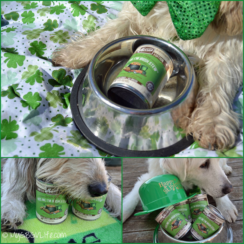 My GBGV Life St. Patrick's Day posing with cans