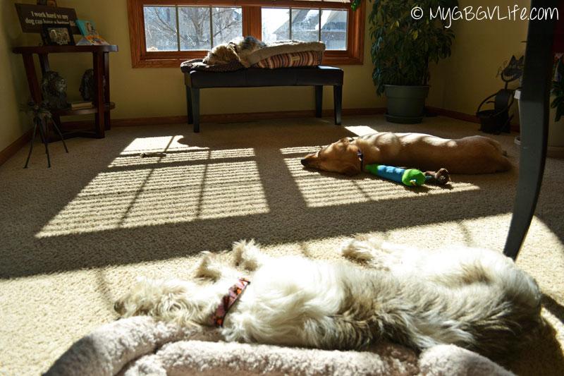 My GBGV Life spring break napping