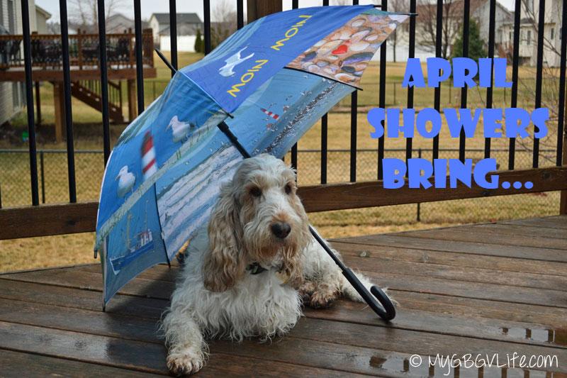 My GBGV Life April Showers