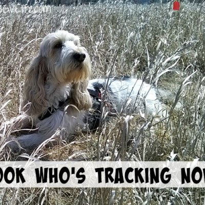 Look Who's Tracking Now