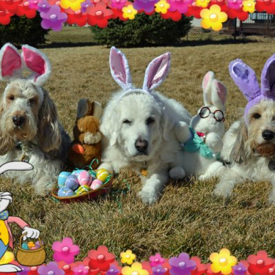 A Hoppy Easter To All