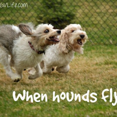 When Pigs, I Mean, Hounds Fly