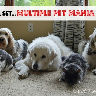 Are You Ready For Multiple Pet Mania #MultiPetMania