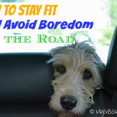 Road Trip Fitness For Dogs And Their Humans