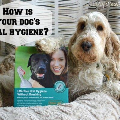 Revolutionary Dog Dental Care With Emmi-Pet
