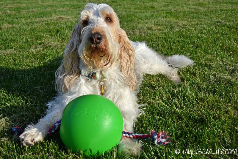 My GBGV Life with Tuggo Dog Toy