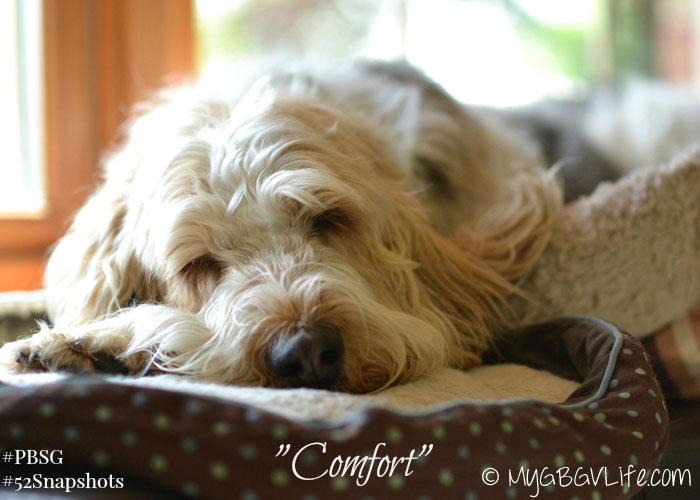 MyGBGV Live comfort