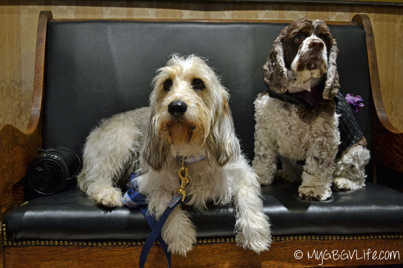 My GBGV Life PR Dog Bailie with Dexter from Fidose of Reality at BlogPaws 2015 in Nashville