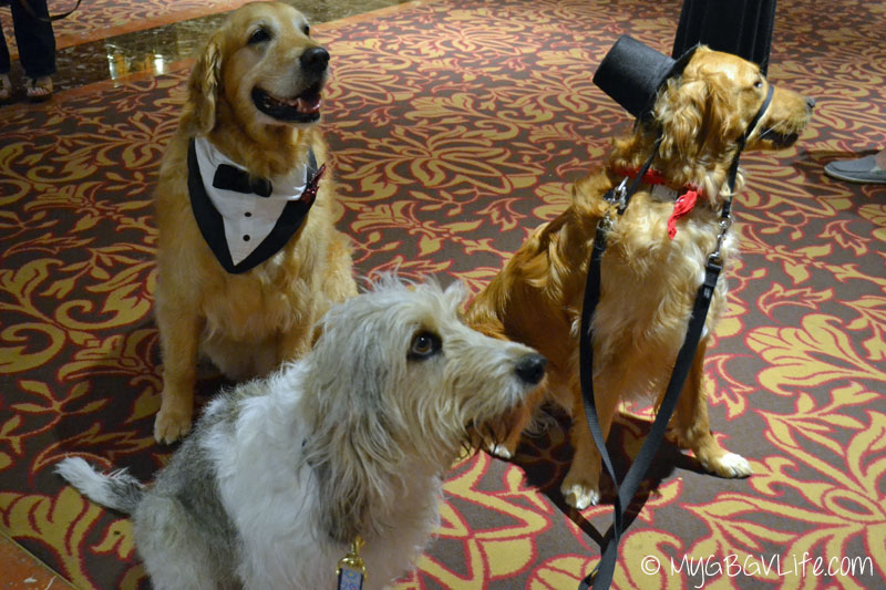 My GBGV Life PR Dog Bailie with charlie and harley at blogpaws 2015 in nashville