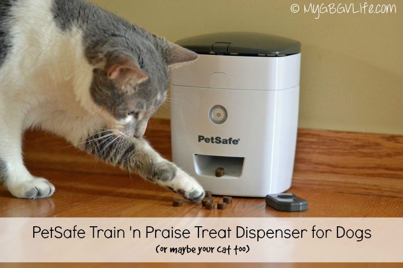 My GBGV Life the cat and the treat dispenser