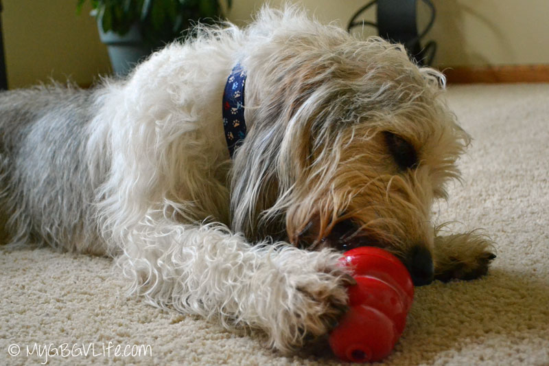 My GBGV Life calm your dog down with a kong