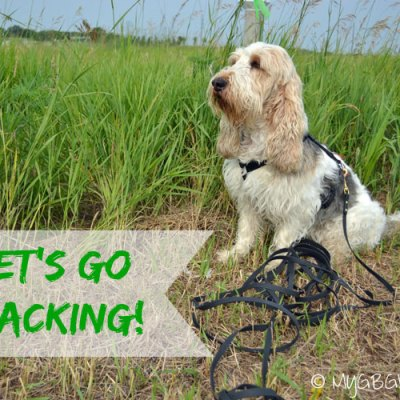 Why Tracking In The Summer Is Difficult