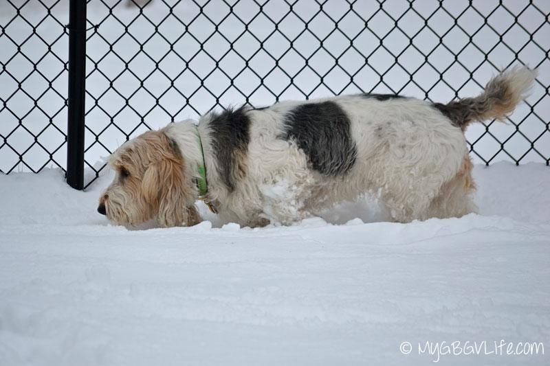 My GBGV Life perimiter search in snow