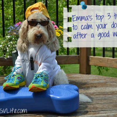 3 Tips To Calm Your Dog After A Workout