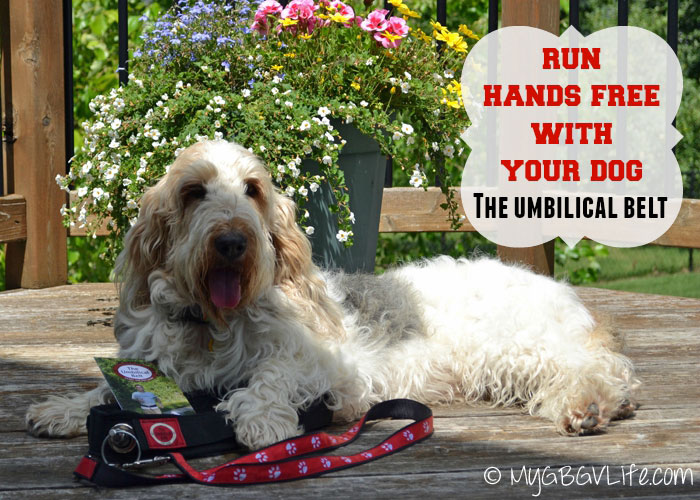 My GBGV Life run hands free with your dog
