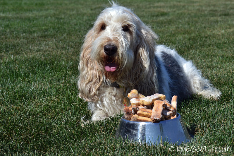 My GBGV Life with bowl of dog cookies