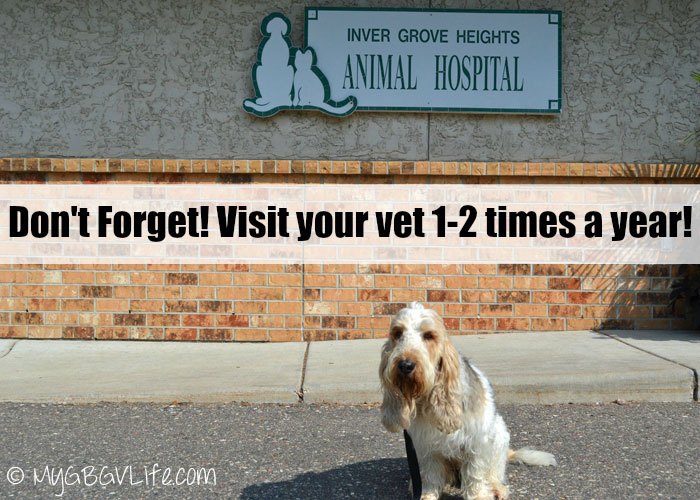 My GBGV Life an annual vet visit for pets is a must
