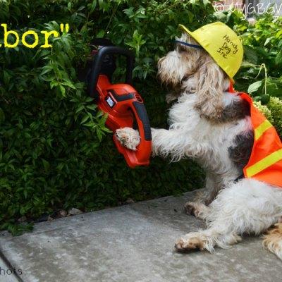 Labor – One Handy Dog
