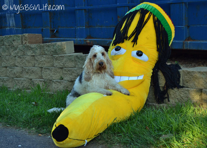 My GBGV Life hanging out with the Rastafarian banana