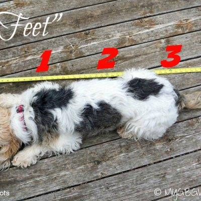 Feet? How Many Feet?