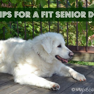 8 Tips For A Fit Senior Dog
