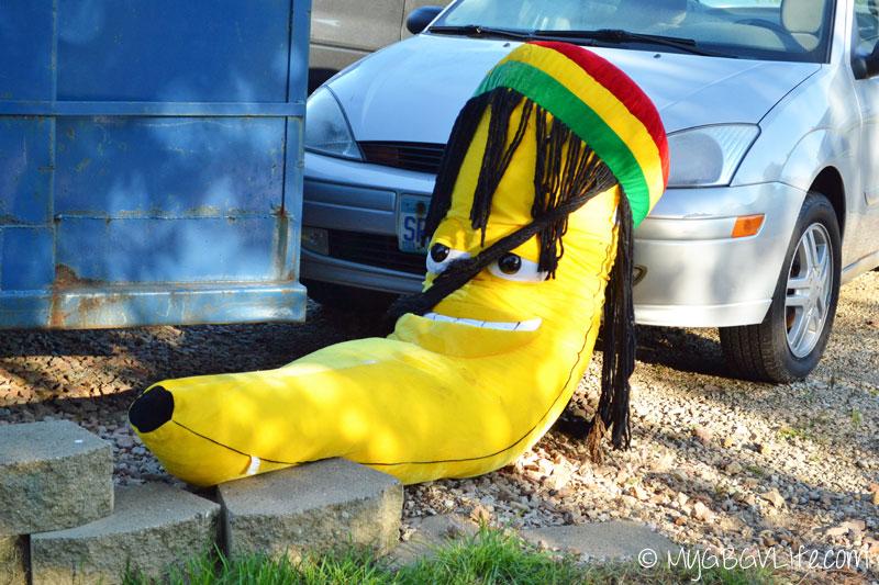 My GBGV Life discarded Rastafarian banana