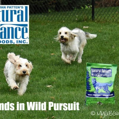Wild Pursuit Satisfies Primal Cravings #NaturalBalance