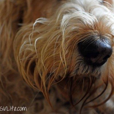 I Nose Selfie Plus Newsflash From Bert