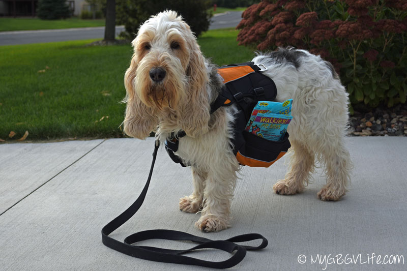 My GBGV Life ready for a walk with Walkies! Fit Bites