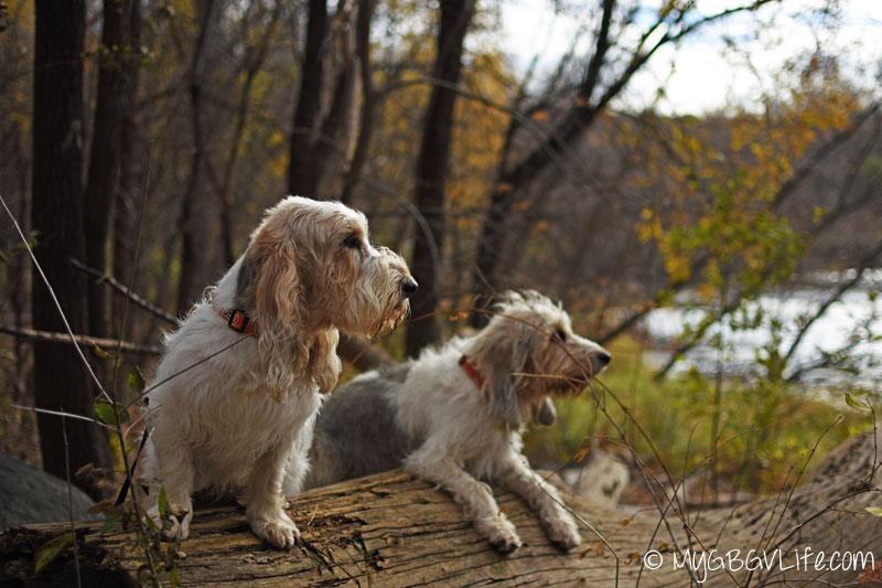 My GBGV Life Bailie and Emma on a log
