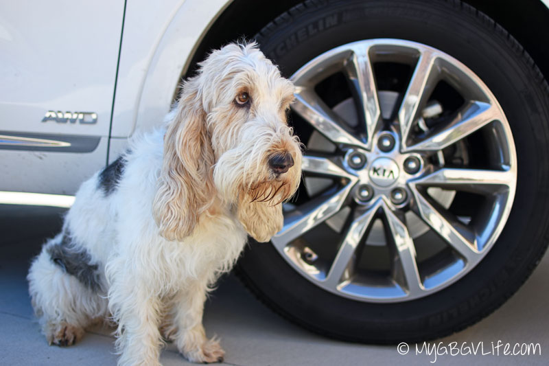 My GBGV Life with chrome alloy wheels