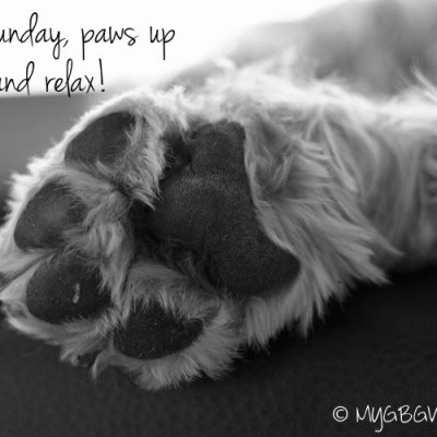 Put Those Paws Up And Relax