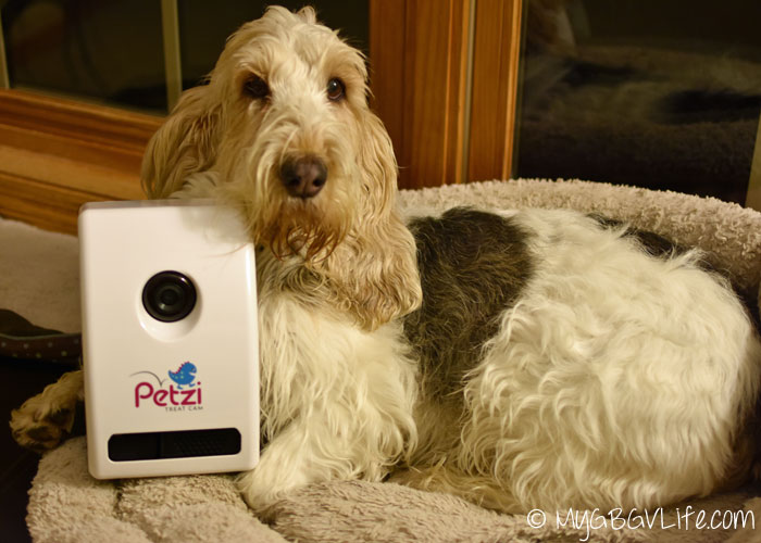 My GBGV LIfe with Petzi Treat Cam